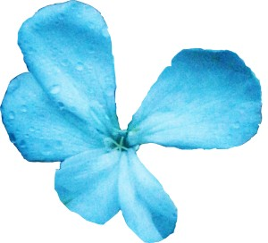Flower 3, White